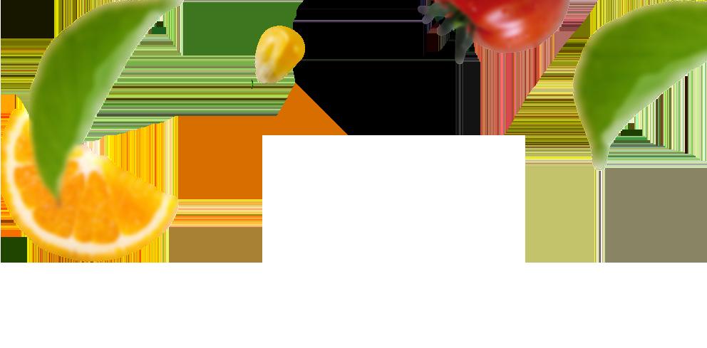 لایه یازدهم اسلایدر قبل و بعد گرین ورلد ، هویت بصری ، هویت بصری گرین ورلد ، شرکت تبلیغاتی ، شرکت تبلیغاتی الف ، طراحی لوگو ، طراحی لوگو تایپ ، کود مایع گرین ورلد ، طراحی هویت بصری